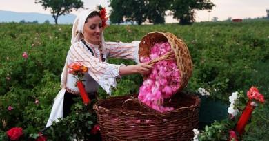 Karlovo Rose Festival